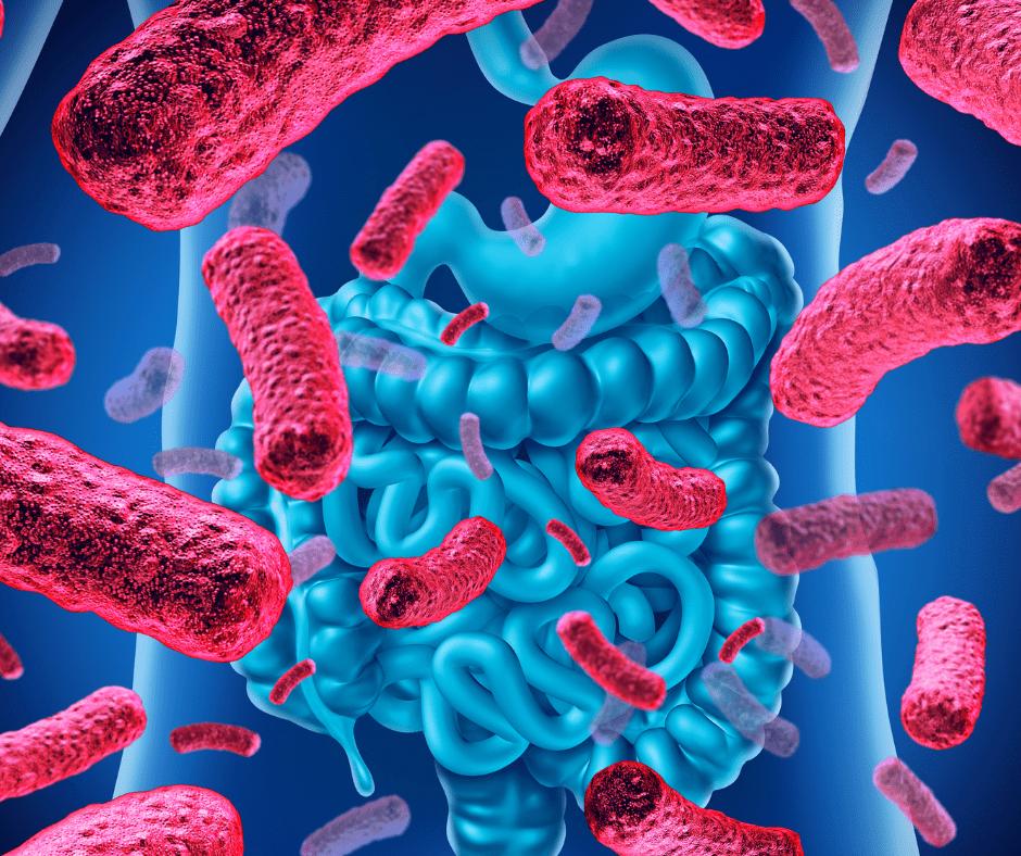 The Benefits of Prebiotics and Probiotics Simplified